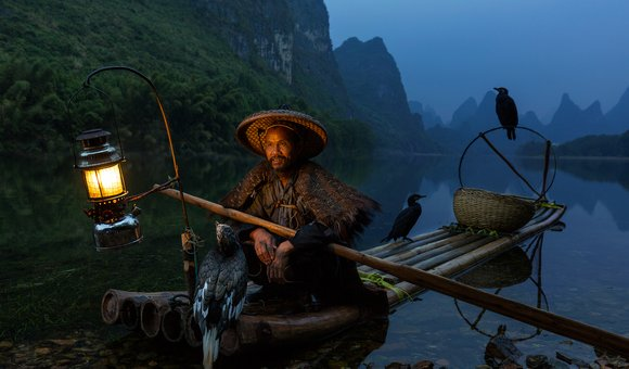 The traditional cormorant fishing in China, the fisherman works in the early hour before the sunrise. He will sail on his bamboo raft with his trained cormorant birds to catch some fish.